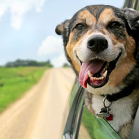 How to Tell if Your Dog is Happy