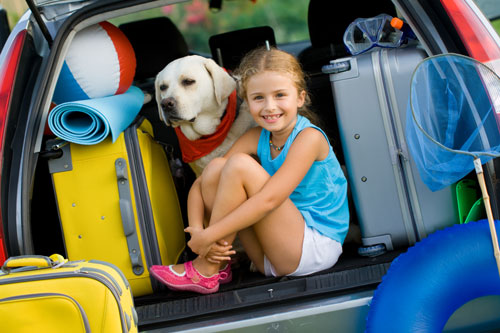 Safely Traveling With Dogs in the Car